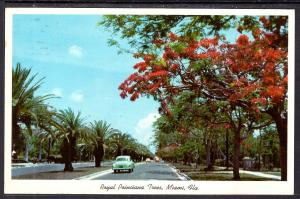 Royal Poinciana Tree,Miami,FL BIN
