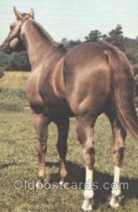 Mack By Bar AQHA Champion Red Roan Horse Postcard Postcards  Mack By Bar AQHA...