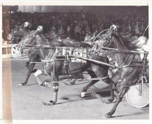 ROOSEVELT RACEWAY, Harness Horse Race , MALICE winner, 1982