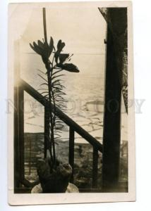 148127 Norway SPITSBERGEN Barentsburg LILY in Window 1936 year