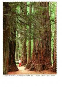 Cathedral Grove of Trees, Vancouver Island. British Columbia