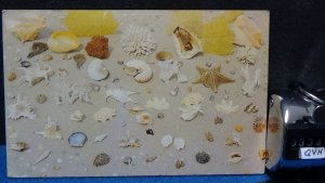 STD Vintage Seashells and Coral of the Sea Florida Posted 1974