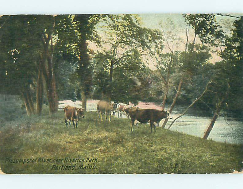 Divided-Back COWS & RIVER & PARK SCENE Portland Maine ME r8086