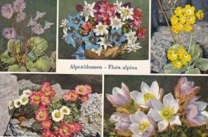 Switzerland Alpenblumen Alpine Flowers 1962