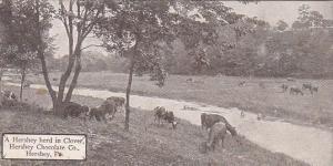 Pennsylvania Hershey Ahershey Herd In Clover Hershey Chocolate Company