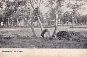 The W Tree Wildwood New Jersey 1910