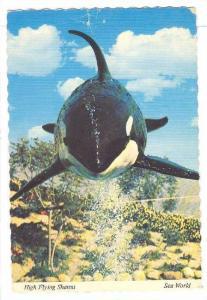 High Flying SHAMU the Killer Whale, SEA WORLD , PU-1979