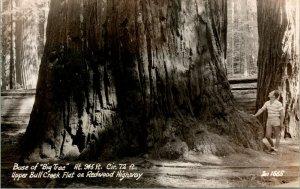 Vintage RPPC Basamento Di  Grande Albero  Superiore Bull Creek Piatto Su