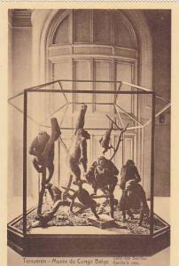 Belgium Tervuren Musee de Congo Salle des Gorilles