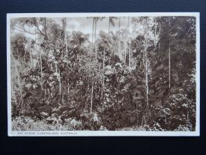 Australia (Emigration) QUEENSLAND BIG SCRUB c1924 Postcard by Raphael Tuck