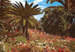 Portugal Madeira Funchal Jardin tropical, Tropischer Garten
