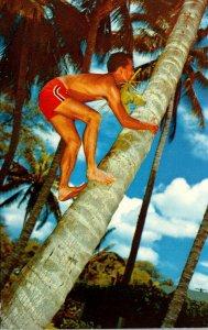 Hawaii Native Cocopalm Climber