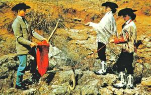 Okeene OK Diamondback Rattlesnake Round-Out Oklahoma Jaycees Postcard
