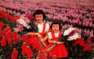 Arizona Phoenix Fields Of Flowers Along Baseline Road 1970