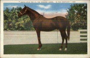 Race Horse North Star III The Wonder Horse Kentucky Linen Postcard