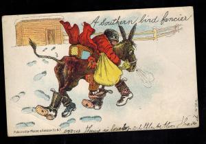 1904 Wingdale NY Postcard Cover Black Americana Boy Stealng Chicken Bird Fancier