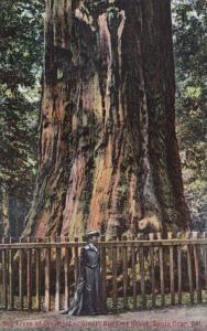 California Santa Cruz Giant Tree In The Big Tree Grove