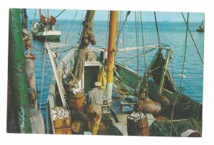 Massachusetts Unloading Fish from a Cape Cod Fishing Boat Vintage Postcard