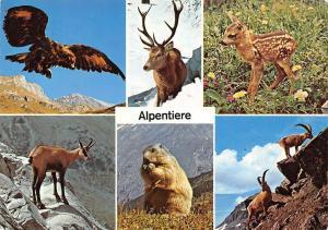 Switzerland Alpentiere Animals Adler Hirsch Rehkitz Gemse Murmeltier Steinbock