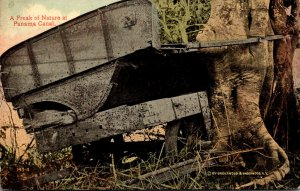 Panama Canal Freak Of NatureTree Growing Through Abandoned Equipment