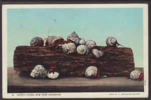 Hermit Crabs,New York Aquarium,NY Postcard