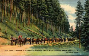 Idaho Coeur d'Alene National Forest Pack Train With 64 Horses and Mules