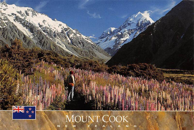 Australia Mount Cook with wild Lupins in flower, South Island New Zealand