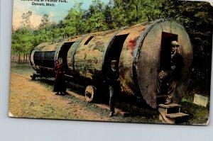 Michigan Detroit Palmer Park Spruce Log 1913 Curteich