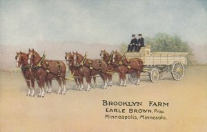 MINNEAPOLIS , Minnesota , 1908 ; Brooklyn Farm , Belgian Horses