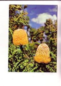 Banksia Blossoms, Murfett Publishers, Australia