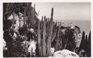 RP, Les Jardins Exotiques Et Un Coin Rocher, Monaco, 1920-1940s