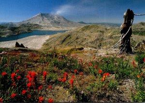 Washington Mount St Helens Panoramic View