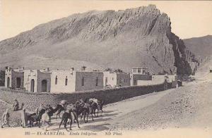 EL KANTARA, Ecole Indigne, Camels, Biskra, Algeria, 00-10s