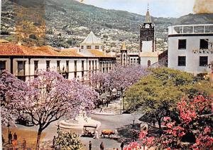 Portugal Old Vintage Antique Post Card Flowering Jacaranda trees Madeira Unused