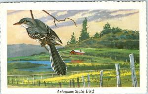 Vintage ARKANSAS STATE BIRD Postcard Mocking Bird Artist-Signed KEN HAAG 1968