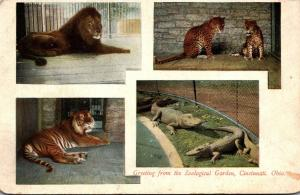 Ohio Cincinnati Greetings From Zoological garden With Lion Tiger & More