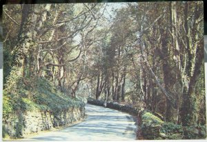 England The Undercliff Ventnor Isle of Wight - posted 1978