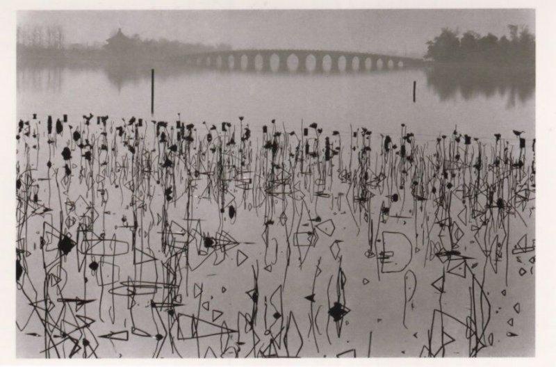 Dead Lorus Leaves 1960s Kunming Lake Beijing China Photo Postcard