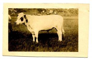 A Bum Steer?     *RPPC