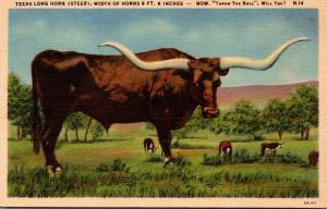 Texas Long Horn Steer Width Of Horns 9 Feet 6 Inches Curteich