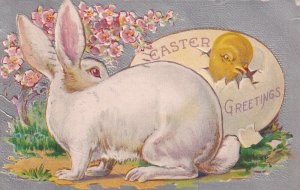 EASTER Greetings, PU-1909; Chick Hatching, Rabbit