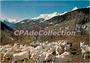 Postcard Modern Landscapes of France Alpage