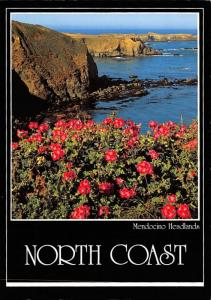 Mendocino Headlands - North Coast