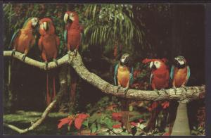 Parrots,Parrot Jungle,Miami,FL Postcard