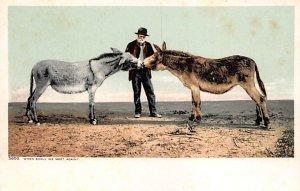 Donkeys Donkey Unused