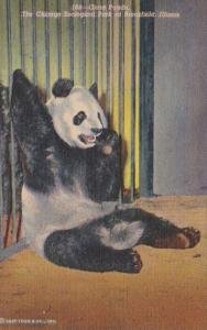 Illinois Chicago Giant Panda Brookfield Zoo Curteich