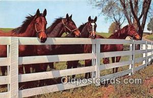 Friendly Gathering Free Lance Photographers Guild, Inc Postcard Post Card Fre...