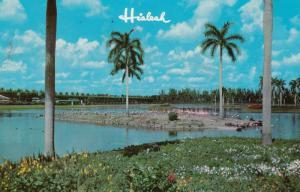Florida Flamingos , 1950-60s #15 (Miami)