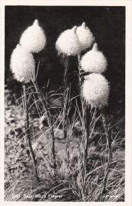 RP; Bear Grass Flower, 1950s