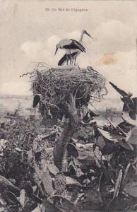 Storks In Nest Un Nid De Cigognes